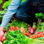 Coas Colombia Agricultura Sostenible