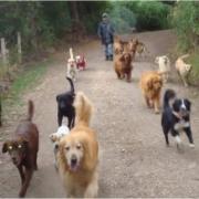 Guarderia canina spot