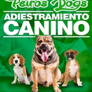Adiestramiento Canino Peiros Dog